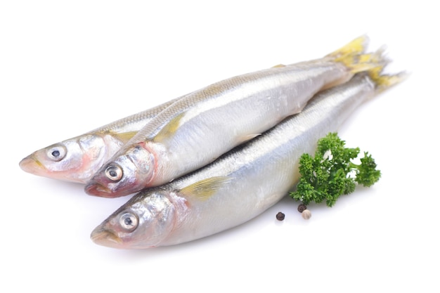 Smelt fish on white background