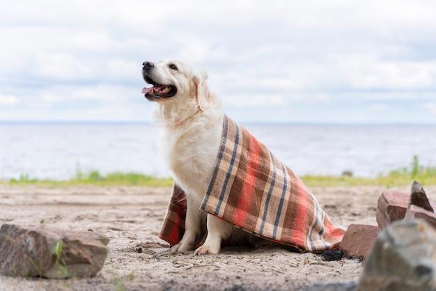 담요로 덮여 웃는 개