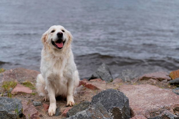 Cane sorridente seduto vicino all'acqua