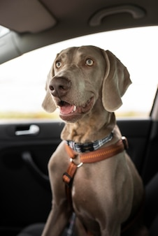 車に座っているスマイリー犬