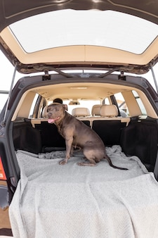 Smiley dog staying peaceful in a car trunk