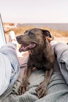 飼い主の隣で平和を保つスマイリー犬