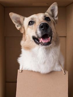 段ボールのバナーを身に着けているスマイリー犬