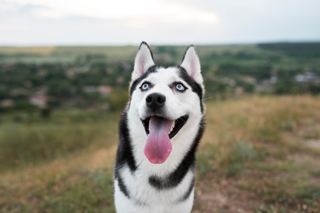 Smiley dog with tongue out in nature