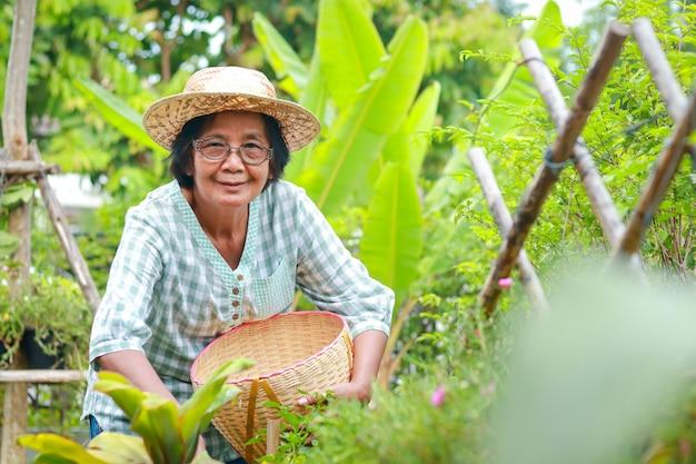 웃고 있는 아시아 노인 여성은 집에서 먹을 유기농 야채를 재배합니다. 그녀는 음식을 만들기 위해 바구니에 야채를 넣고 있습니다. 코로나바이러스 전염병, 노인 정원 가꾸기 동안 식품 보안 개념.