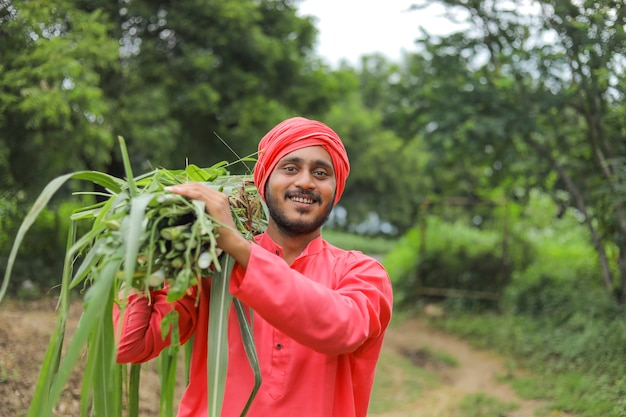 Smiling asian farmer carrying fresh green grass on his shoulder for feeding cattle