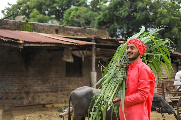 牛を養うために彼の肩に新鮮な緑の草を運ぶ笑顔のアジアの農家