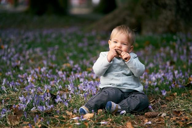 웃는 아이는 피는 크로커스와 푸른 잔디 사이 풀밭에 앉아 전나무 콘을 g 아 먹습니다.