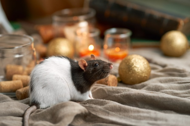 Улыбаясь декоративная крыса среди рождественских игрушек и свечей. 2020 год новый символ
