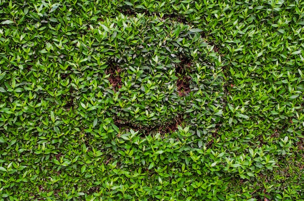 Smiling emoji. emoji with a smile on green leaves background.