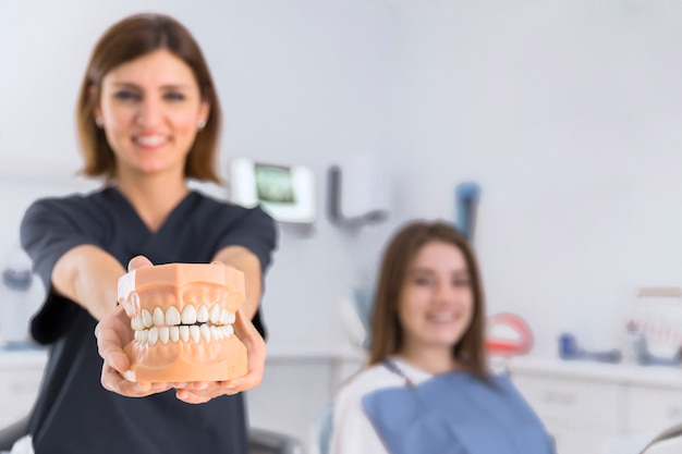 Smiling female dentist showing teeth model sitting in front of female patient at dental clinic