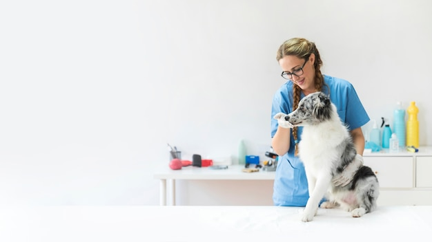 Smiling female veterinarian touching dog's mouth in clinic