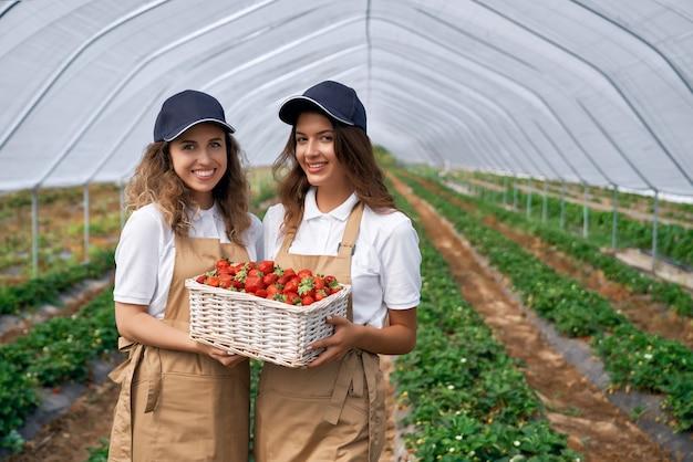 웃는 현장 근로자는 딸기 바구니를 들고있다