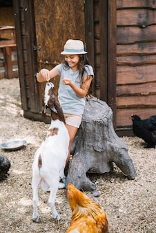 Smiling girl feeding food to goat in the barn