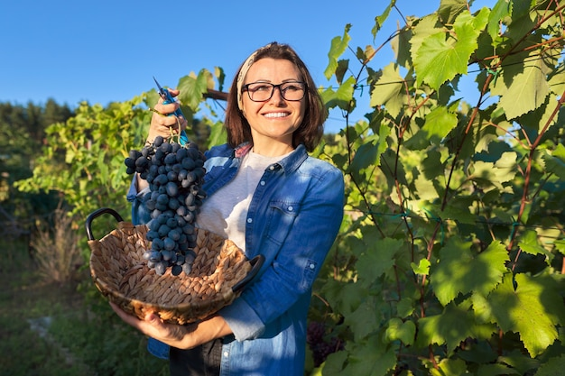 青ブドウの新鮮なカットの大きなブドウの束を示す笑顔の幸せな女性の庭師。日没の背景に日当たりの良いブドウ園。ブドウ栽培、ガーデニング、趣味、レジャーのコンセプト