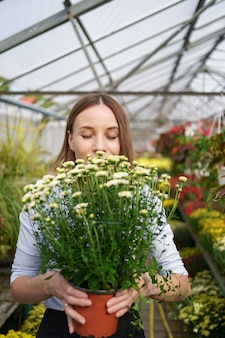 Smiling happy florist in her nursery standing holding potted chrysanthemums in her hands as she tends to the gardenplants in the greenhouse