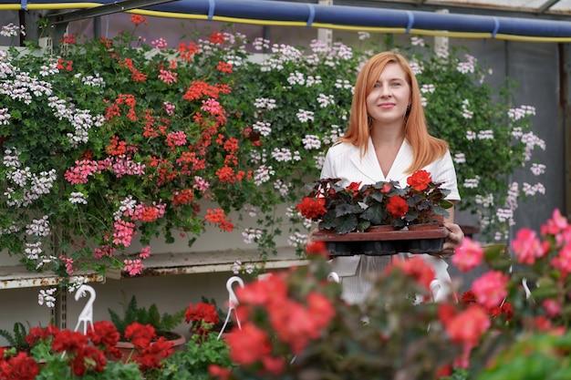 彼女は温室の庭の植物に傾向があるように彼女の手で鉢植えの赤いゼラニウムを持って立っている彼女の保育園で幸せな花屋を笑顔