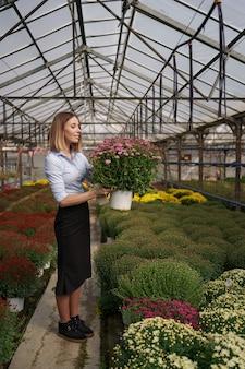 Улыбающийся счастливый флорист в своем питомнике стоит с горшечными хризантемами в руках, ухаживая за садовыми растениями в теплице