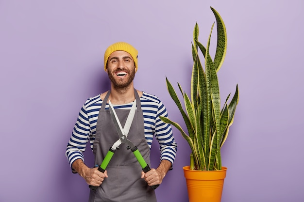 Smiling male gardener holds pruning shears, cares about snake plant in pot, wears hat and apron, has glad expression, being professional florist