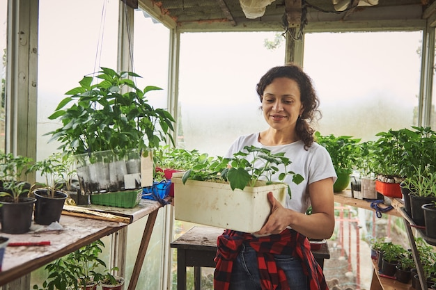 C 온실에서 오이와 토마토의 묘목과 함께 웃는 성숙한 여성 정원사. 봄철 레저 활동