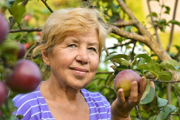 A smiling old woman harvesting apples from a tree