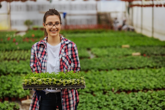 温室に立って、苗木と木枠を保持している中小企業の所有者の笑顔。