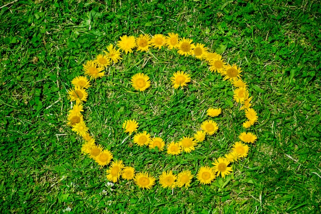 Smiling sun on the grass