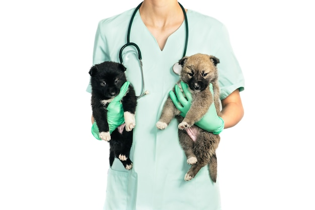 Улыбающийся ветеринар и щенок в клинике, изолированные на белом фоне