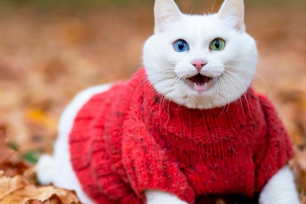 Улыбающийся белый кот, разноцветные глаза, ангорская порода. сидит среди листвы в парке осенним днем. животное в свитере на улице. питомец играет в красно-желтом клене.