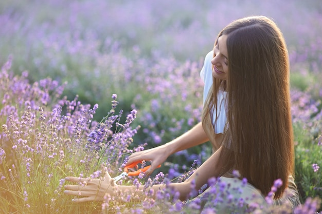 Smiling woman collecting lavender harvest in field