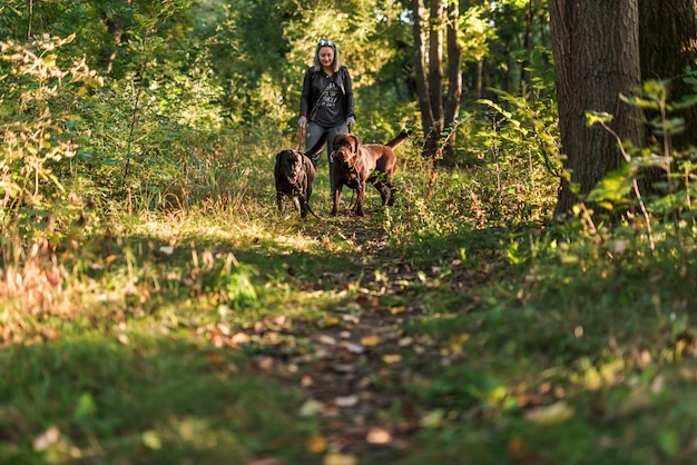 Smiling woman holding leash her pets while walking in forest
