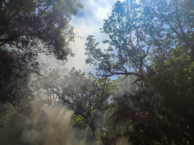 Дым и огонь в зеленых джунглях следы солнца на небе