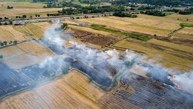 Smoke from burning rice stubble on top view