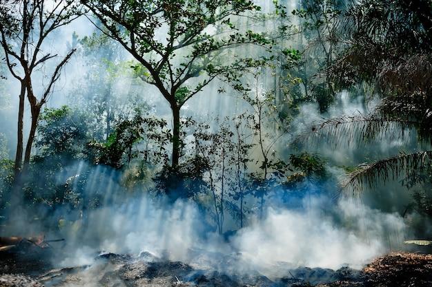 정글의 화재로 인한 연기 태양 광선이 나무를 통과합니다. 뜨거운 열대 기후로 인한 화재