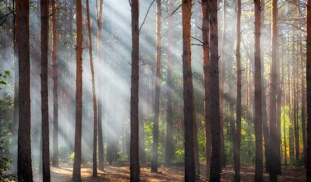숲 속의 연기, 태양 광선이 연기를 비 춥니 다.