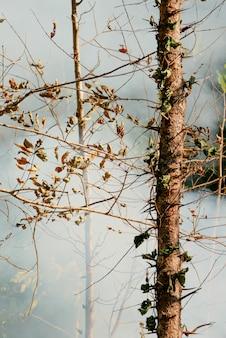 Дым прерий огня. сухая трава пылает среди кустов уничтожением лесов