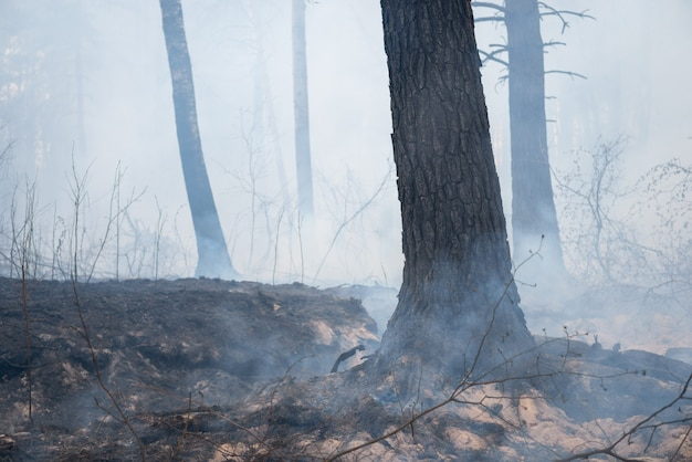 Smoldering trees, grass and roots of trees with a lot of smoke