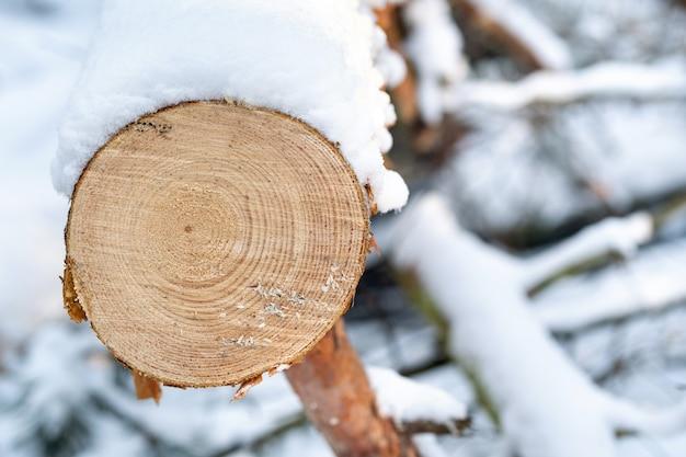 冬の森の木をなめらかに切ります。