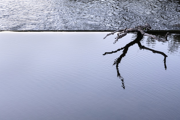 A snag lies on the edge of a dam in a calm water zone.