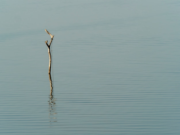 Snag and rope for fisherman boat in lake in the morning with water background