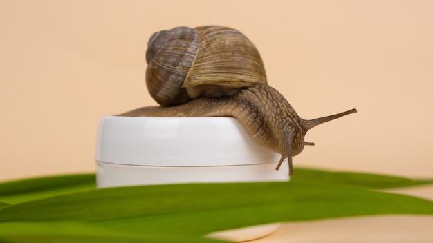 베이지 색 표면에 달팽이와 뮤신 크림