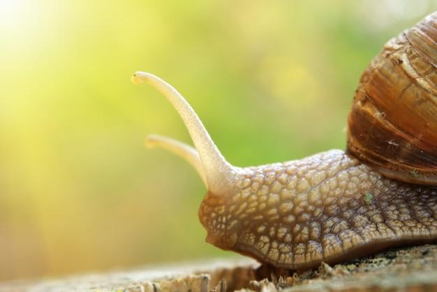 달팽이와 자연