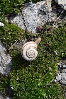 Snail crawling on moss.
