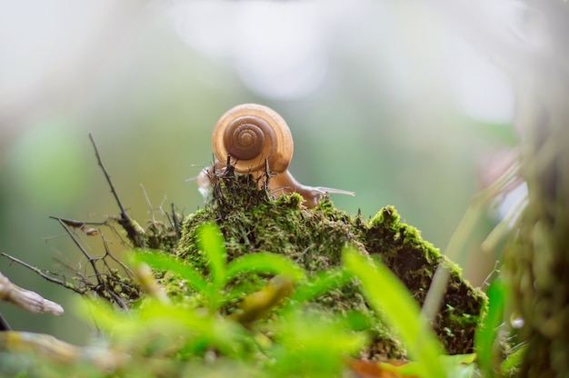 Snail crawling on old wood with moss in garden