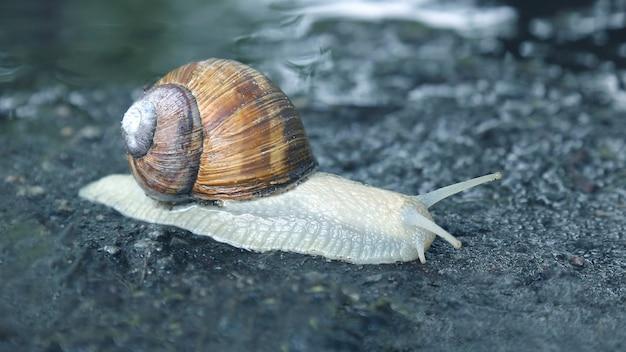 젖은 길을 기어가는 달팽이. 동물의 세계