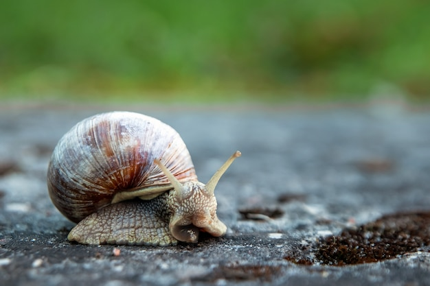 Snail crawling on a stone in the park