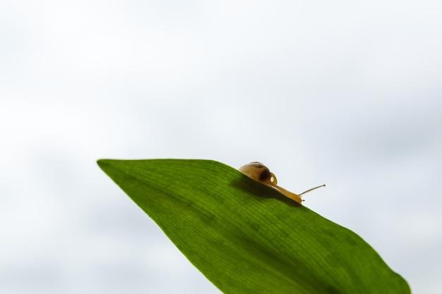 흐린 하늘에 대 한 녹색 잎에 들어온다 달팽이