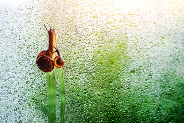 물에 줄을 걷는 달팽이 가족