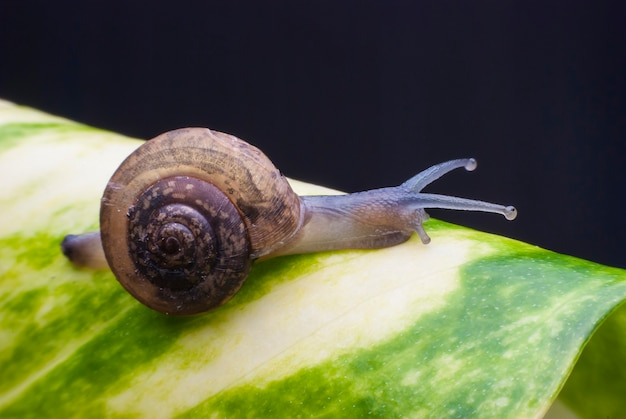 Snail on a green leaf