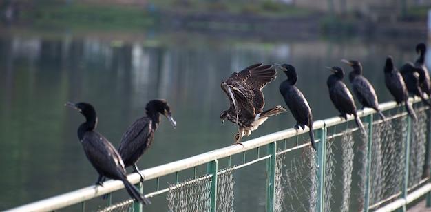 獲物が爪にあり、餌を与える準備ができているカタツムリの鷹、自然光、選択的な焦点。
